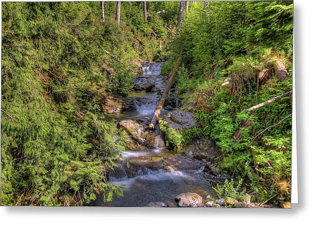 The Quinault Stream 2 Greeting Card by Richard J Cassato