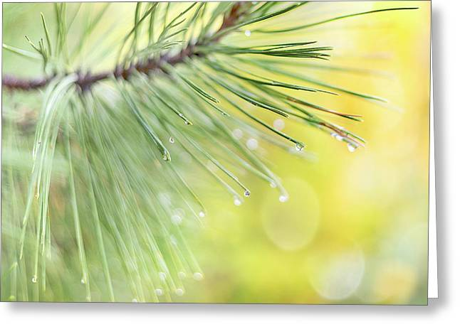 The Rain The Park And Other Things Greeting Card
