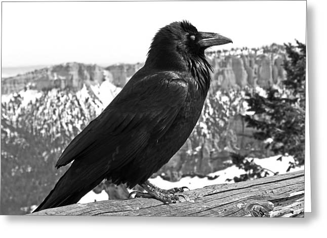 The Raven - Black And White Greeting Card