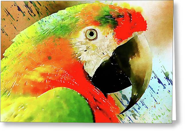 The Real Macaw Greeting Card