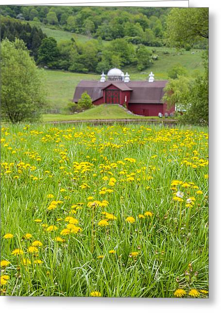 Greeting Card featuring the photograph The Red Barn And Dandelions by Paula Porterfield-Izzo