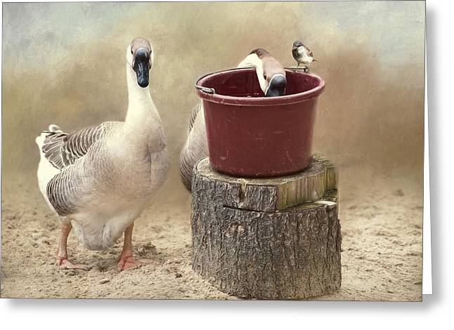 Greeting Card featuring the photograph The Red Bucket by Robin-Lee Vieira
