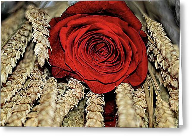 Greeting Card featuring the photograph The Red Rose On A Bed Of Wheat by Diana Mary Sharpton