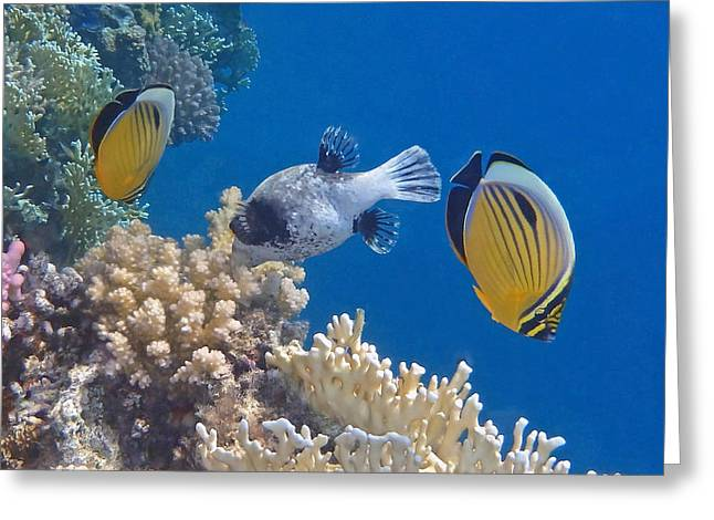 The Red Sea Underwater World Greeting Card