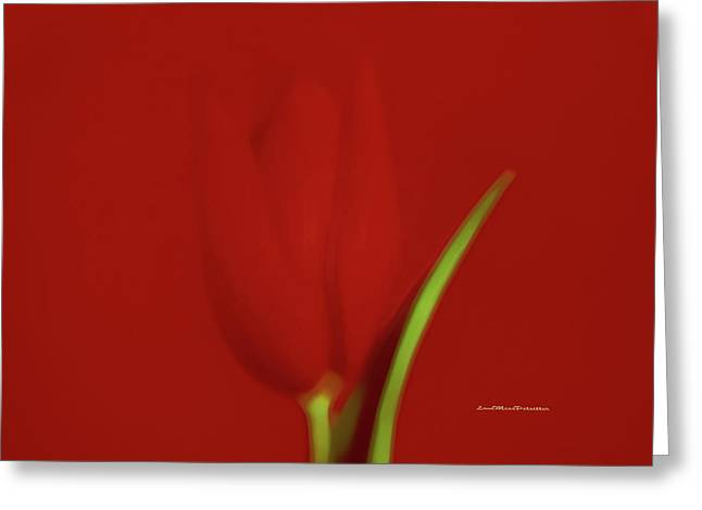The Red Tulip Art Photograph 2 Greeting Card