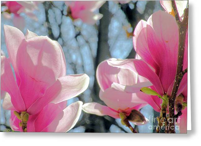 The Return Of Spring Greeting Card by Christine Belt