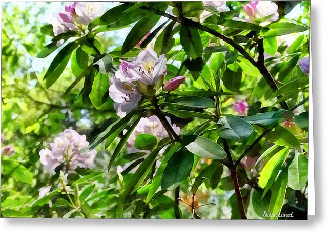 The Rhododendrons Are In Bloom Greeting Card by Susan Savad