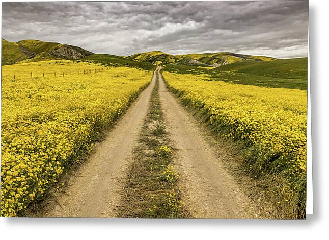 Greeting Card featuring the photograph The Road Less Pollenated by Peter Tellone