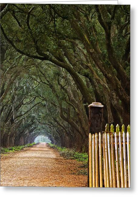 The Road To Evergreen Plantation Greeting Card