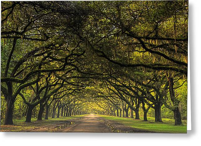 The Road To Wormsloe Greeting Card by Ken Smith