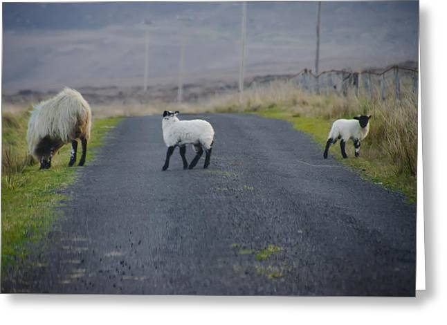 The Roads In Ireland Greeting Card by Bill Cannon