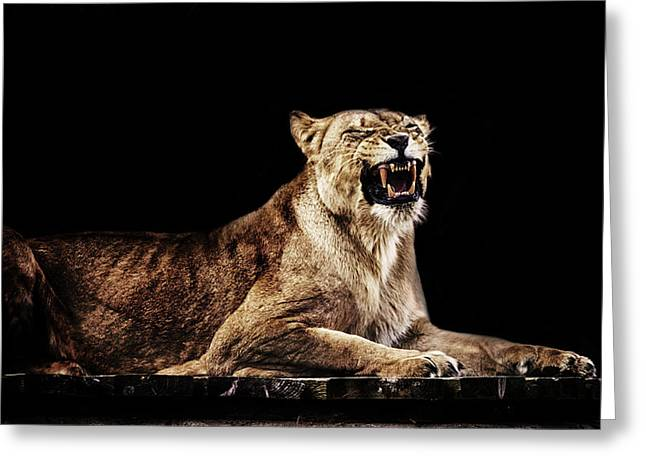 The Roar Greeting Card by Martin Newman