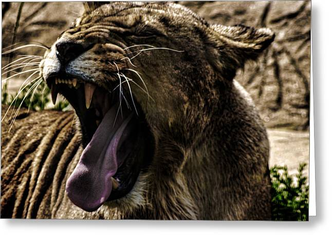 The Roaring Lion Greeting Card by Martin Newman