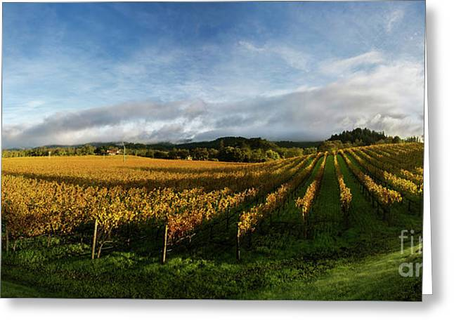 The Rolling Vineyards Of Napa  Greeting Card by Jon Neidert