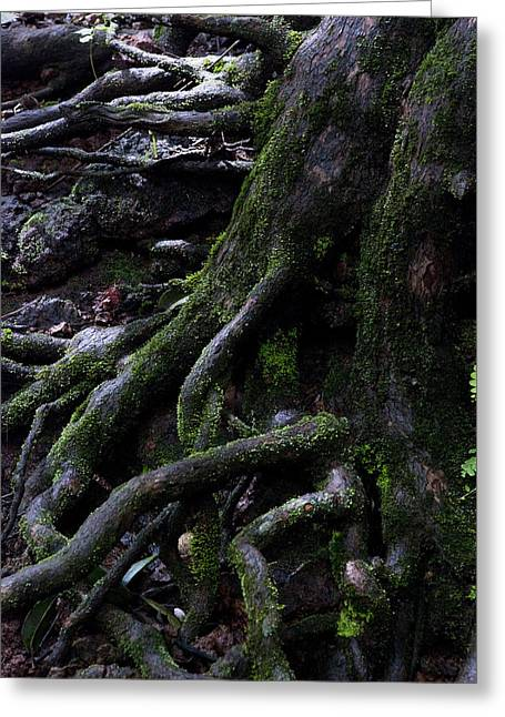 The Root Greeting Card by Pramod Bansode