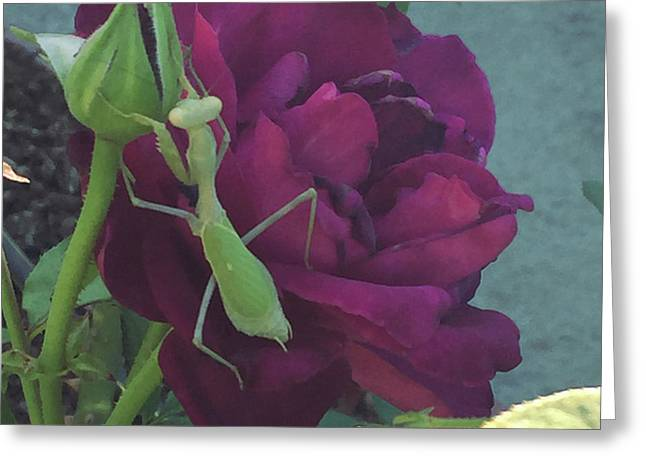 The Rose And Mantis Greeting Card