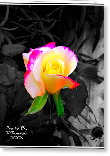 The Rose Greeting Card by Doug Sanchez