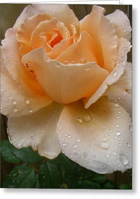 The Rose Greeting Card by Kimberly Morin