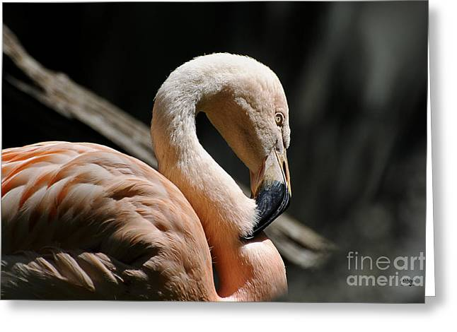 The Sacred Old Flamingoes Greeting Card by Lois Bryan