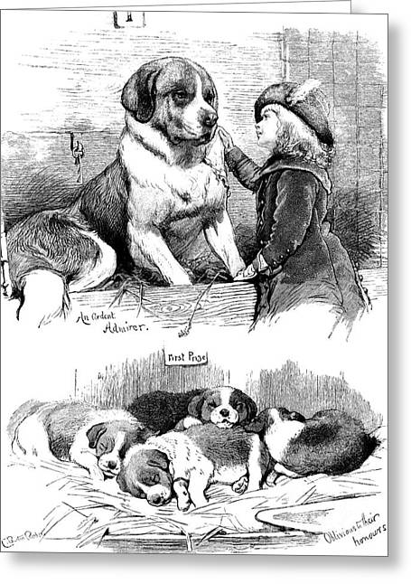 The Saint Bernard Club Dog Show Greeting Card