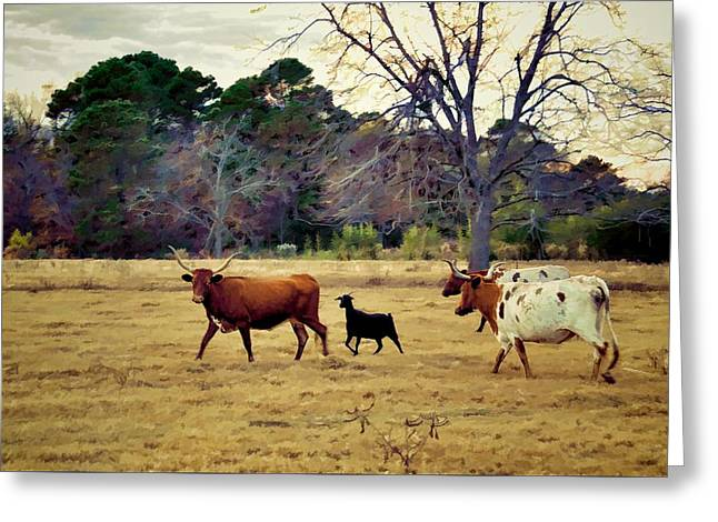 The Scapegoat Greeting Card by Jan Amiss Photography