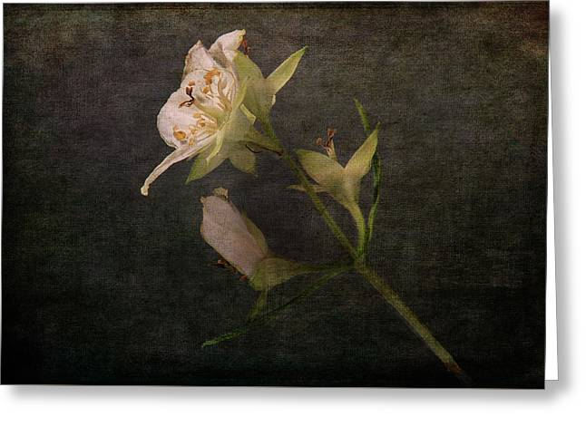 Greeting Card featuring the photograph The Scent Of Jasmines by Randi Grace Nilsberg
