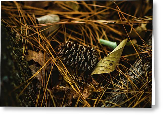 The Scent Of Pine Greeting Card by Nancy Mathia