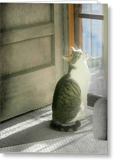 The Screen Door Cat Greeting Card by Diana Angstadt