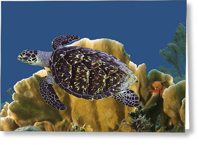 Greeting Card featuring the photograph The Sea Turtle by Paula Porterfield-Izzo