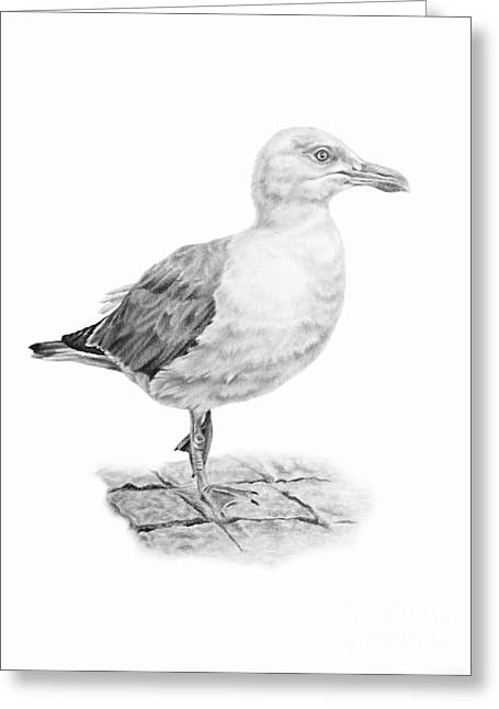 The Seagull Strut Greeting Card