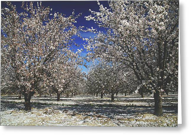 Greeting Card featuring the photograph The Season Of Us by Laurie Search