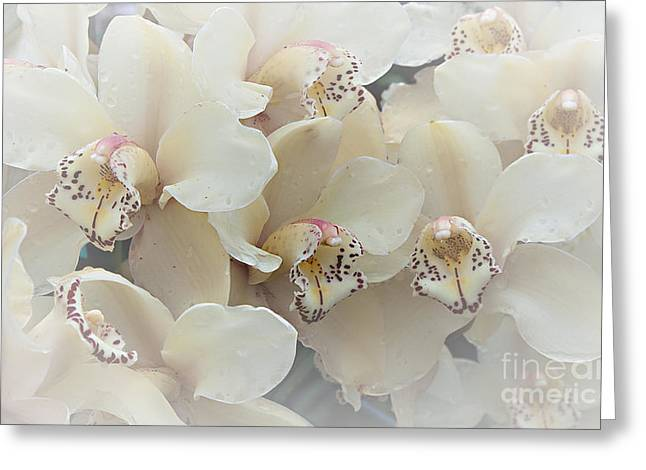 The Secret To Orchids Greeting Card by Sherry Hallemeier