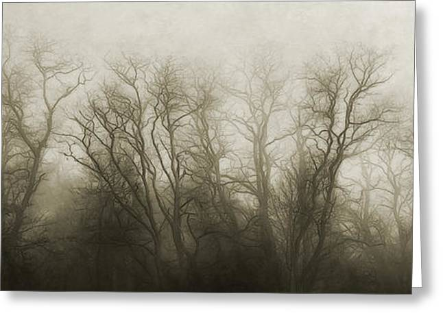 The Secrets Of The Trees Greeting Card by Scott Norris