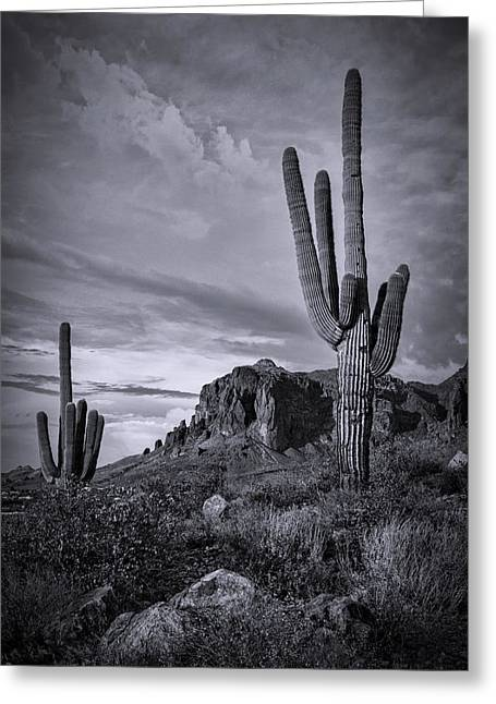Greeting Card featuring the photograph The Sentinels Of The Supes In Black And White  by Saija Lehtonen