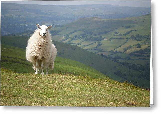 The Sheep Portrait Greeting Card by Andrea Guariglia