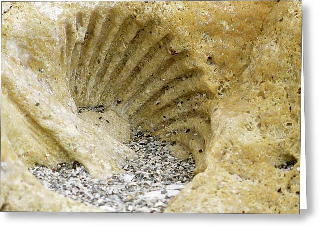 The Shell Fossil Greeting Card