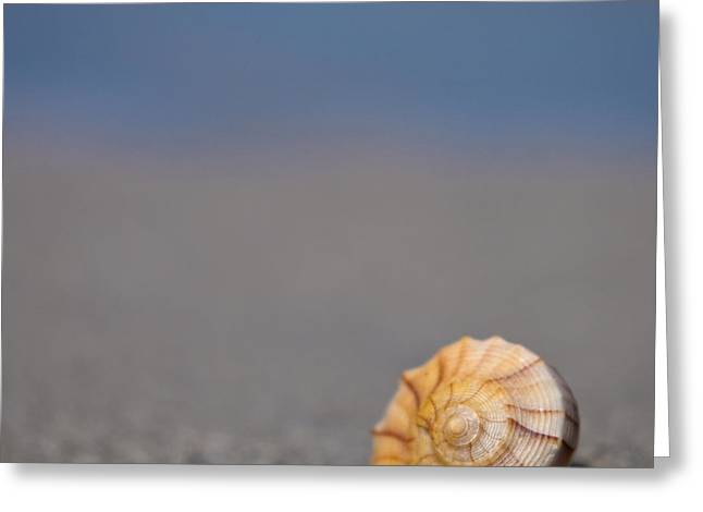 The Shell Greeting Card by Ryan Heffron