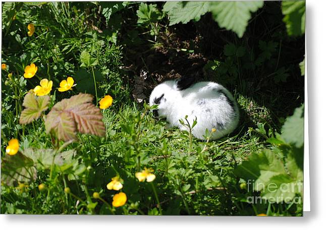 The Sleeper Greeting Card by TChamberlin Photography