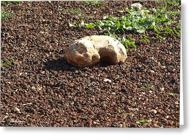 Greeting Card featuring the photograph The Sleeping Stone. by Arik Baltinester