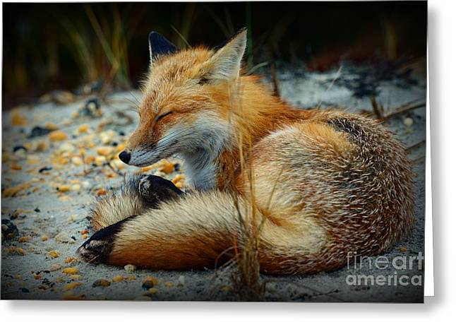 The Sleepy Fox Greeting Card by Paul Ward
