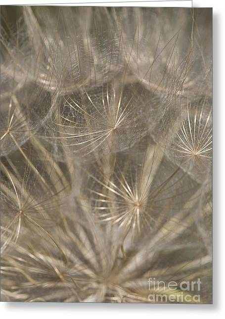 The Slightest Breeze... Greeting Card by Anne Gilbert