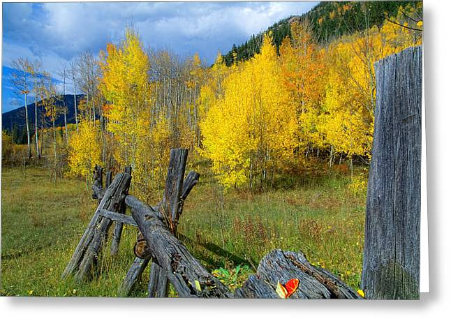 The Song Of Aspens Greeting Card by Tim Reaves