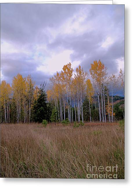 The  Song Of The Aspens 2 Greeting Card