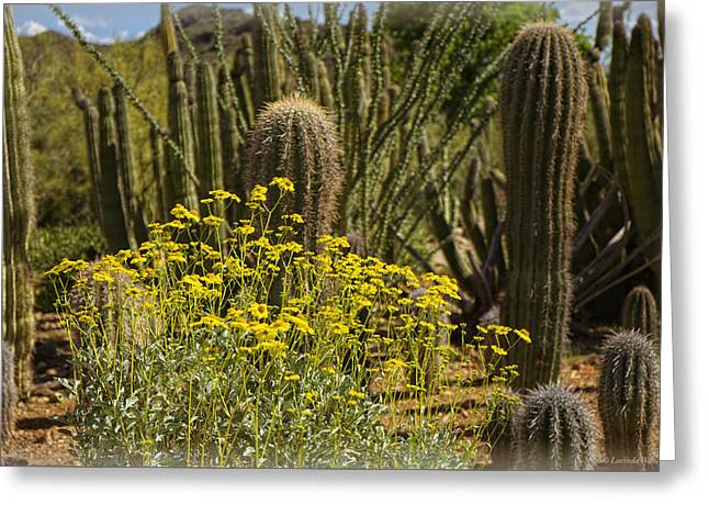 The Song Of The Sonoran Desert Greeting Card
