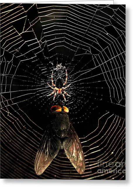 The Spider  And The Fly Greeting Card by Wingsdomain Art and Photography