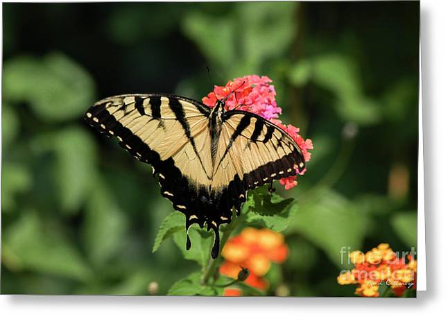 The Spread Eastern Tiger Swallowtail Butterfly Art Greeting Card by Reid Callaway
