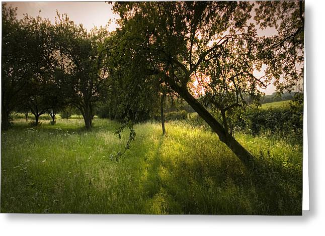 The Spring Orchard Greeting Card by Angel Ciesniarska