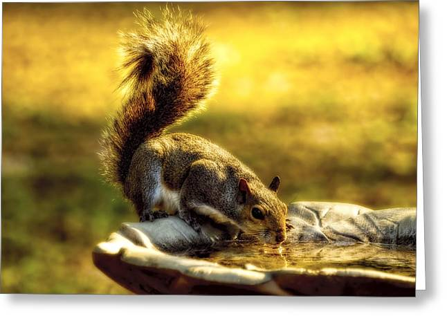 The Squirrel Greeting Card