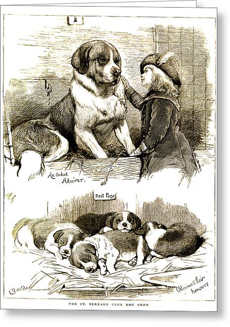 The St Bernard Club Dog Show Greeting Card