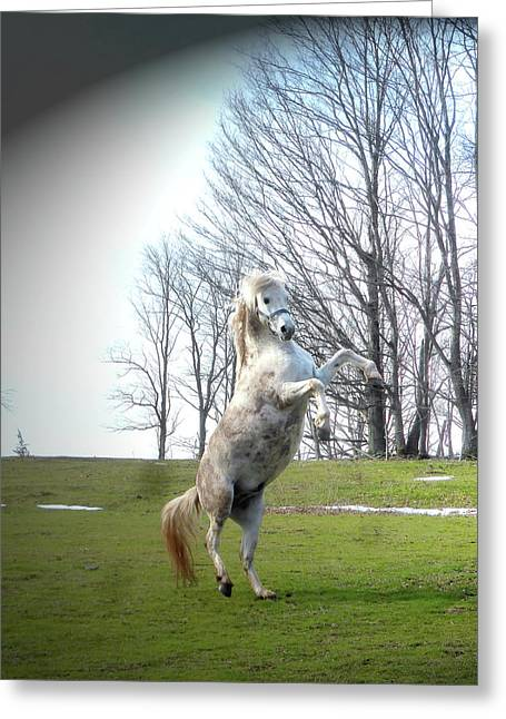 The Stallion Dancer Greeting Card by Patricia Keller
